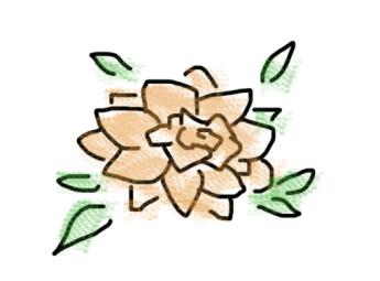 orangerose