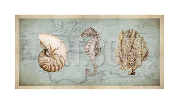 deborah-devellier-sea-treasures