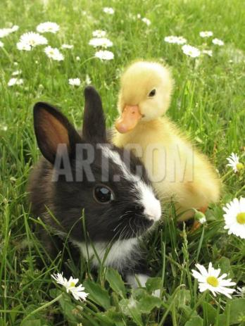 richard-peterson-rabbit-bunny-and-duckling-best-friends