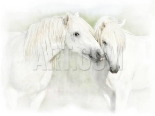 sheila-haddad-two-white-horses-of-camargue-french-nuzzling